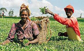 Agriculture Africa